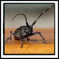 100 Pics Bugs Level 68