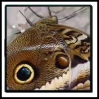 100 Pics Bugs Level 72