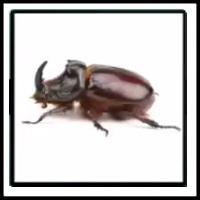 100 Pics Bugs Level 73
