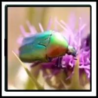 100 Pics Bugs Level 74