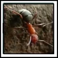 100 Pics Bugs Level 75