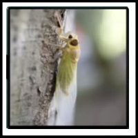 100 Pics Bugs Level 76