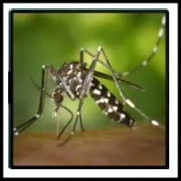 100 Pics Bugs Level 77