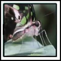 100 Pics Bugs Level 81