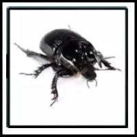 100 Pics Bugs Level 82