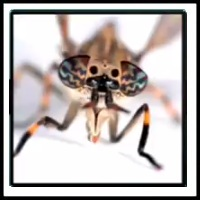 100 Pics Bugs Level 85