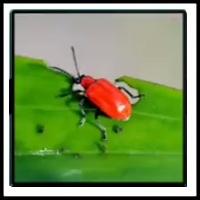 100 Pics Bugs Level 86