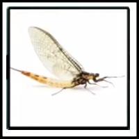100 Pics Bugs Level 87