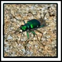 100 Pics Bugs Level 88