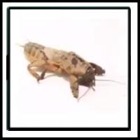 100 Pics Bugs Level 92