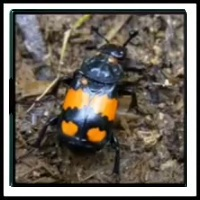 100 Pics Bugs Level 96