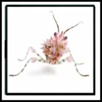 100 Pics Bugs Level 99