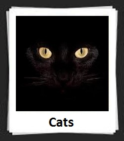 100 Pics CATS Answers