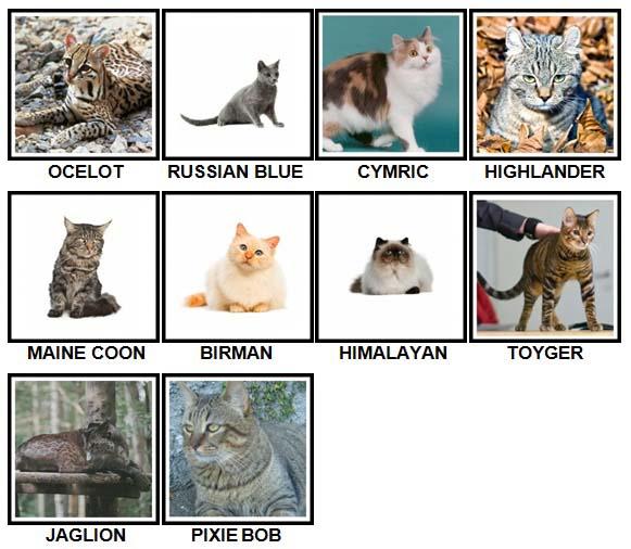 100 Pics Cats Level 41-50 Answers