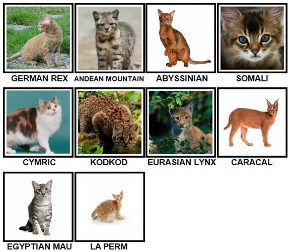 100 Pics CATS Level 51-60 Answers