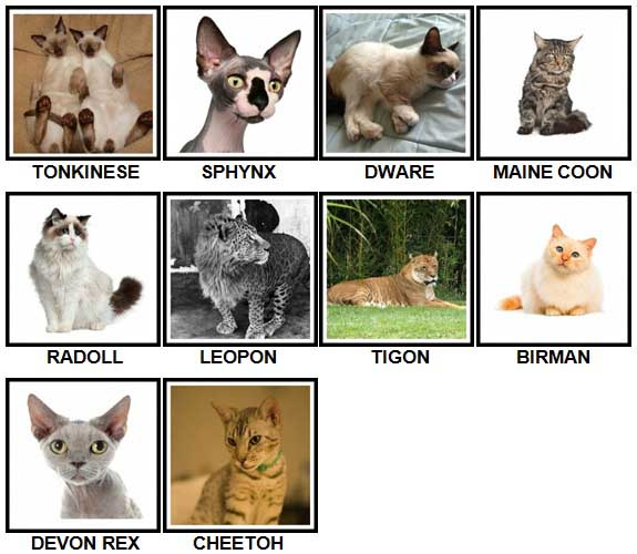 100 Pics CATS Level 61-70 Answers