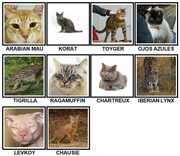100 Pics CATS Level 71-80 Answers