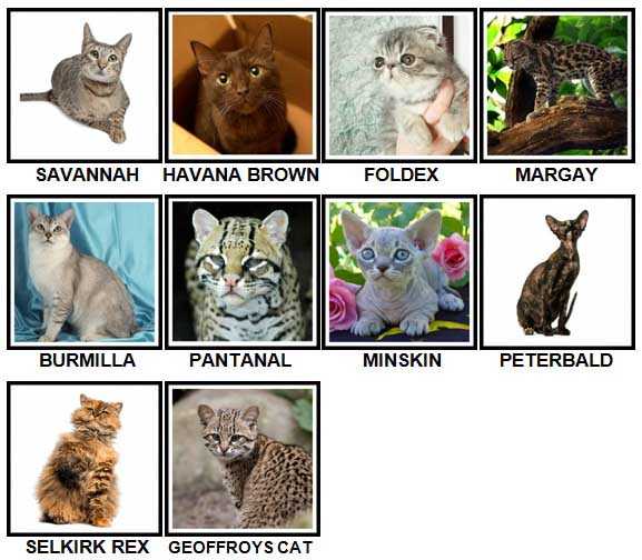 100 Pics CATS Level 81-90 Answers
