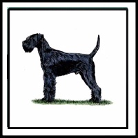 100 Pics Crufts Level 22