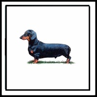 100 Pics Crufts Level 25