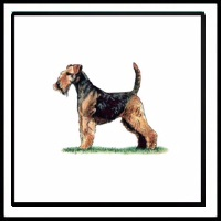 100 Pics Crufts Level 34