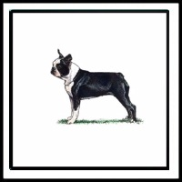 100 Pics Crufts Level 47