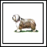 100 Pics Crufts Level 49