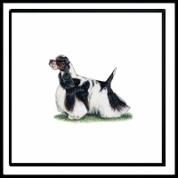 100 Pics Crufts Level 61