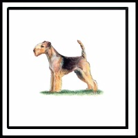 100 Pics Crufts Level 62