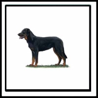 100 Pics Crufts Level 79