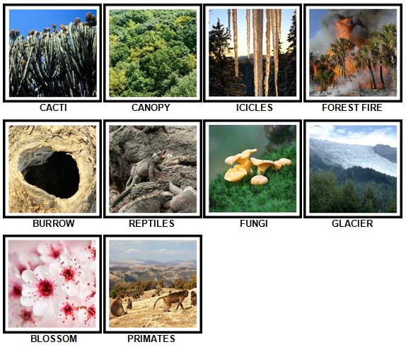 100 Pics Nature Level 41-50 Answers