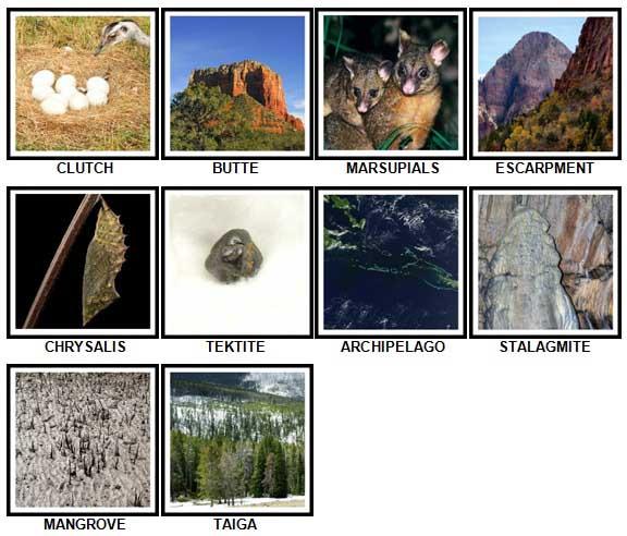 100 Pics Nature Level 81-90 Answers