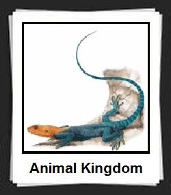100 Pics Animal Kingdom Answers