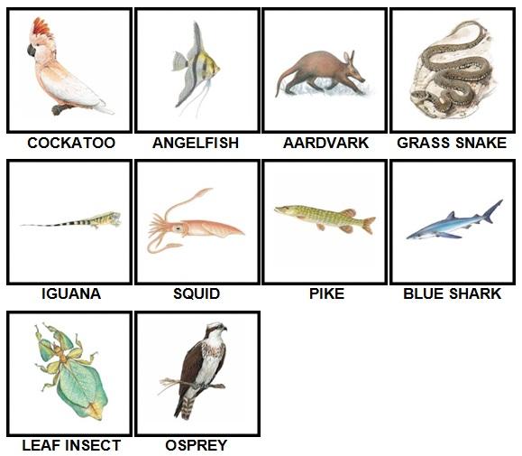 100 Pics Animal Kingdom Level 11-20 Answers