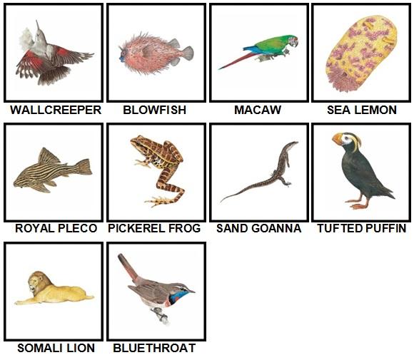 100 Pics Animal Kingdom Level 31-40 Answers