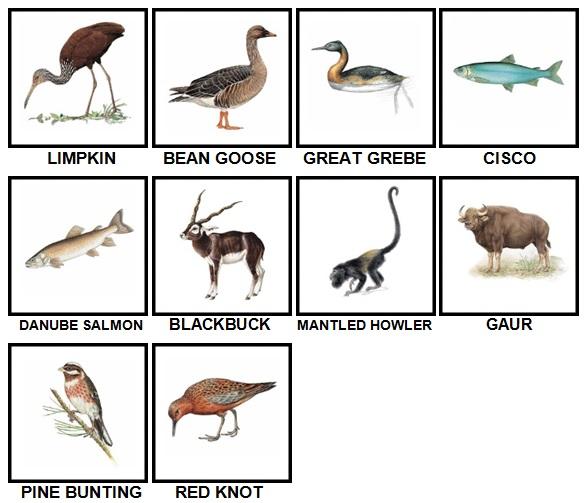 100 Pics Animal Kingdom Level 61-70 Answers | 100 Pics Answers