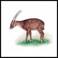 100 Pics Animal Kingdom Level 73