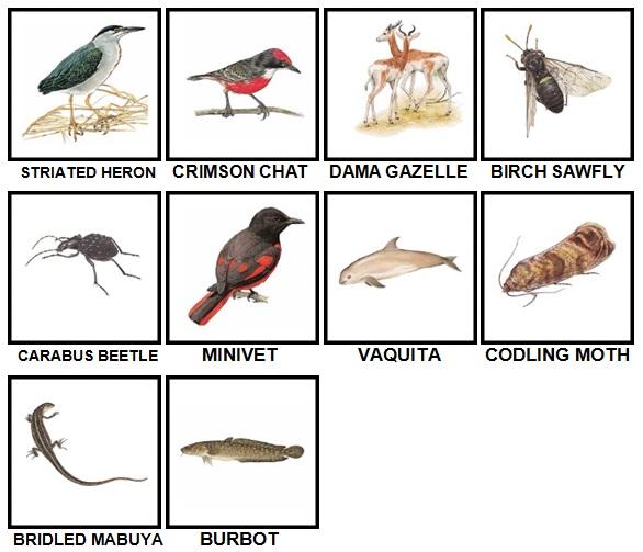 100 Pics Animal Kingdom Level 81-90 Answers