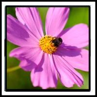 100 Pics Spring Level 71