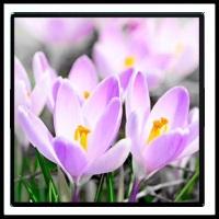 100 Pics Spring Level 83