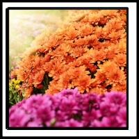 100 Pics Spring Level 96