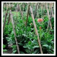 100 Pics Gardening Level 52