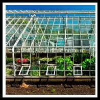 100 Pics Gardening Level 53