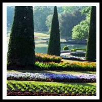 100 Pics Gardening Level 63
