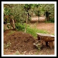 100 Pics Gardening Level 65