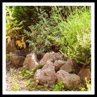 100 Pics Gardening Level 81