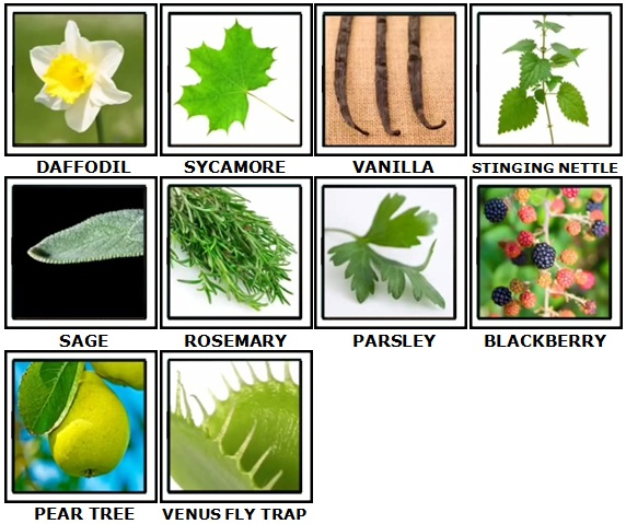 100 Pics Plants Answers 21