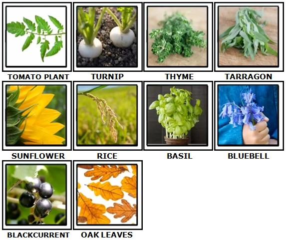 100 Pics Plants Answers 31