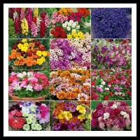 100 Pics Gardening Level 90