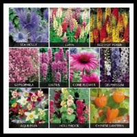 100 Pics Gardening Level 94